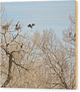 Great Blue Heron Nest Building 1 Wood Print
