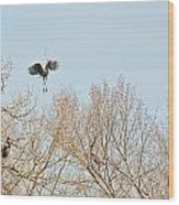 Great Blue Heron Nest Building 2 Panorama View Wood Print