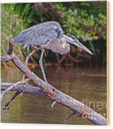 Great Blue Heron Oak Creek Canyon Sedona Arizona Wood Print