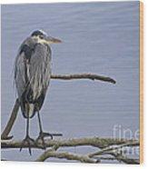 Great Blue Heron On Alert Wood Print