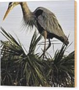 Great Blue Heron On Palm Wood Print