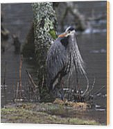 Great Blue Heron On The Clinch River Wood Print