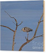 Great Blue Heron Perched On Branch Wood Print