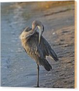 Great Blue Heron Preening On The Beach Wood Print