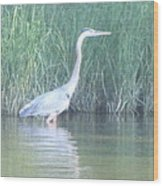 Great Blue Heron Reflecting Wood Print