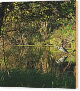 Great Blue Heron Reflecting Wood Print by James Hammen