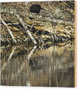 Great Blue Heron Reflection Wood Print