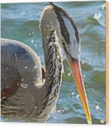 Great Blue Heron Splish Splash Wood Print
