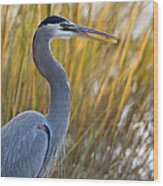 Great Blue Heron Square Image Wood Print