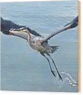Great Blue Heron Take Off Wood Print