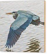Great Blue Heron Taking Flight Wood Print