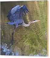 Great Blue Heron Taking Off Wood Print