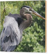 Great Blue Heron Vi Wood Print