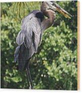 Great Blue Heron Vii Wood Print