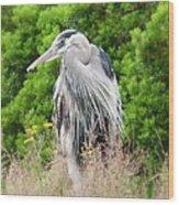 Great Blue Heron Watching And Waiting Wood Print