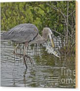 Great Blue Heron With Fish Wood Print