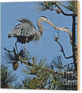 Great Blue Heron With Nest Material Wood Print