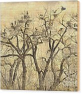 Great Blue Herons Colonies Fine Art Wood Print