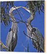 Great Blue Herons Wood Print