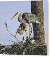 Great Blue Herons Nesting Wood Print