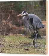 Great Blue On The Clinch River IIi Wood Print