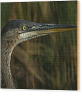 Great Blue Profile Wood Print by Ernie Echols