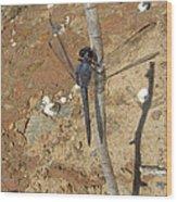 Slaty Skimmer Dragonfly Shadow Wood Print