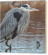 Great Blue Wood Print by Thomas Pettengill