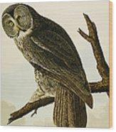 Great Cinereous Owl Wood Print