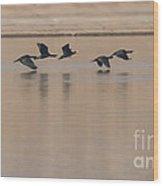 Great Cormorant In Flight Wood Print