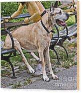 Great Dane Sitting On Park Bench Wood Print
