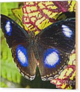 Great Eggfly Butterfly Wood Print