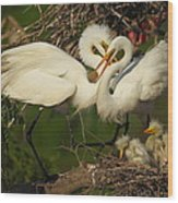 Great Egret 2am-7177 Wood Print
