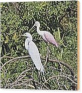 Great Egret And Roseate Spoonbill Wood Print
