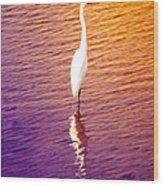Great Egret At Sundown  Wood Print