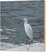 Great Egret Bird Wood Print