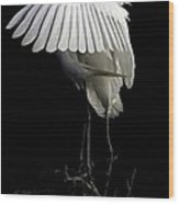 Great Egret Bowing Wood Print