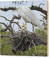 Great Egret Chicks - Sibling Rivalry Wood Print by Carol Groenen