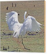 Great Egret Dancing In Auroraville Wood Print