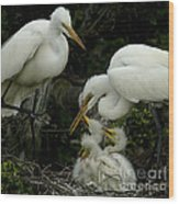 Great Egret Family 2 Wood Print