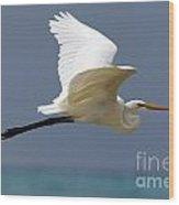 Great Egret Galapagos Wood Print