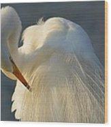 Great Egret Grooming Wood Print