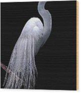 Great Egret I Wood Print