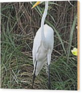 Great Egret In The Green Wood Print