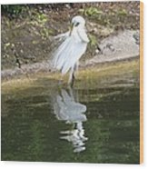 Great Egret In The Lake Wood Print