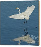Great Egret Landing Wood Print