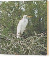 Great Egret Lookout Wood Print