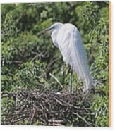 Great Egret Nest Wood Print