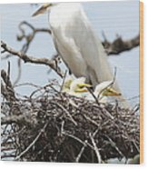 Great Egret Nest With Chicks And Mama Wood Print