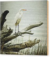 Great Egret On A Fallen Tree Wood Print by Joan McCool